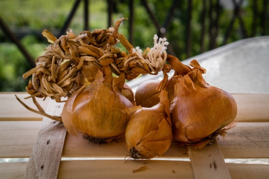 onions-998510_1920